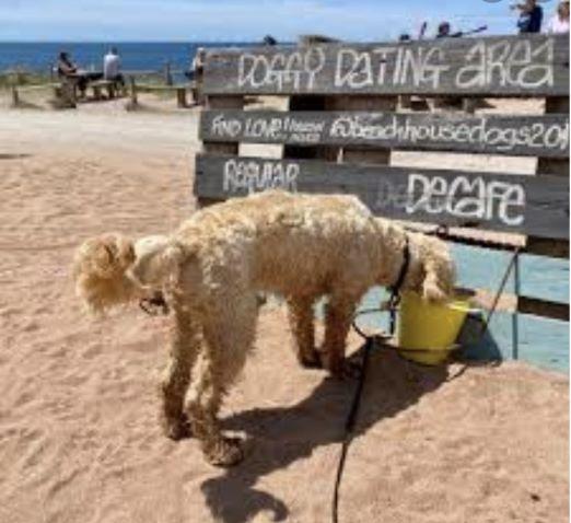 Dog @ The Beach Hut small
